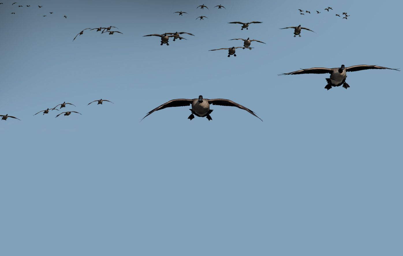 Free Waterfowl Hunting Wallpaper