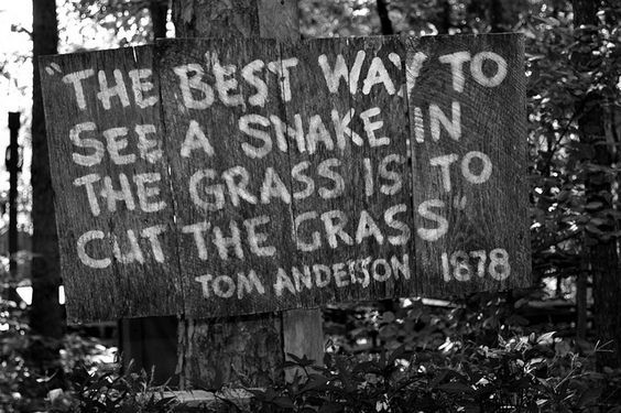 Snake In The Grass Sign Favorite Quotes Quotes Grass Quotes