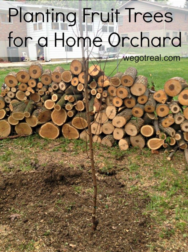 die besten 25 obstb ume pflanzen ideen auf pinterest obstbaumgarten obstb ume kaufen und. Black Bedroom Furniture Sets. Home Design Ideas