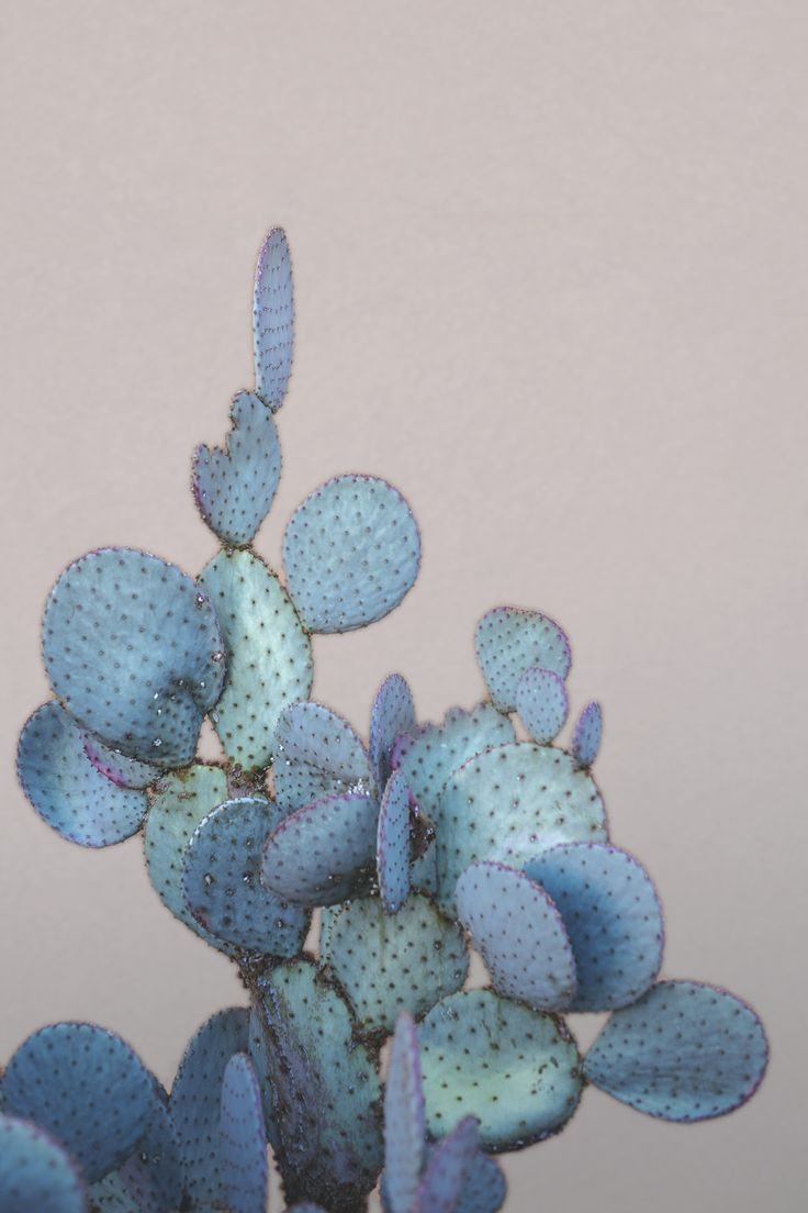 Photo of Cactus Art #Photography #Desert #Cactus #Art #Wall Art #P