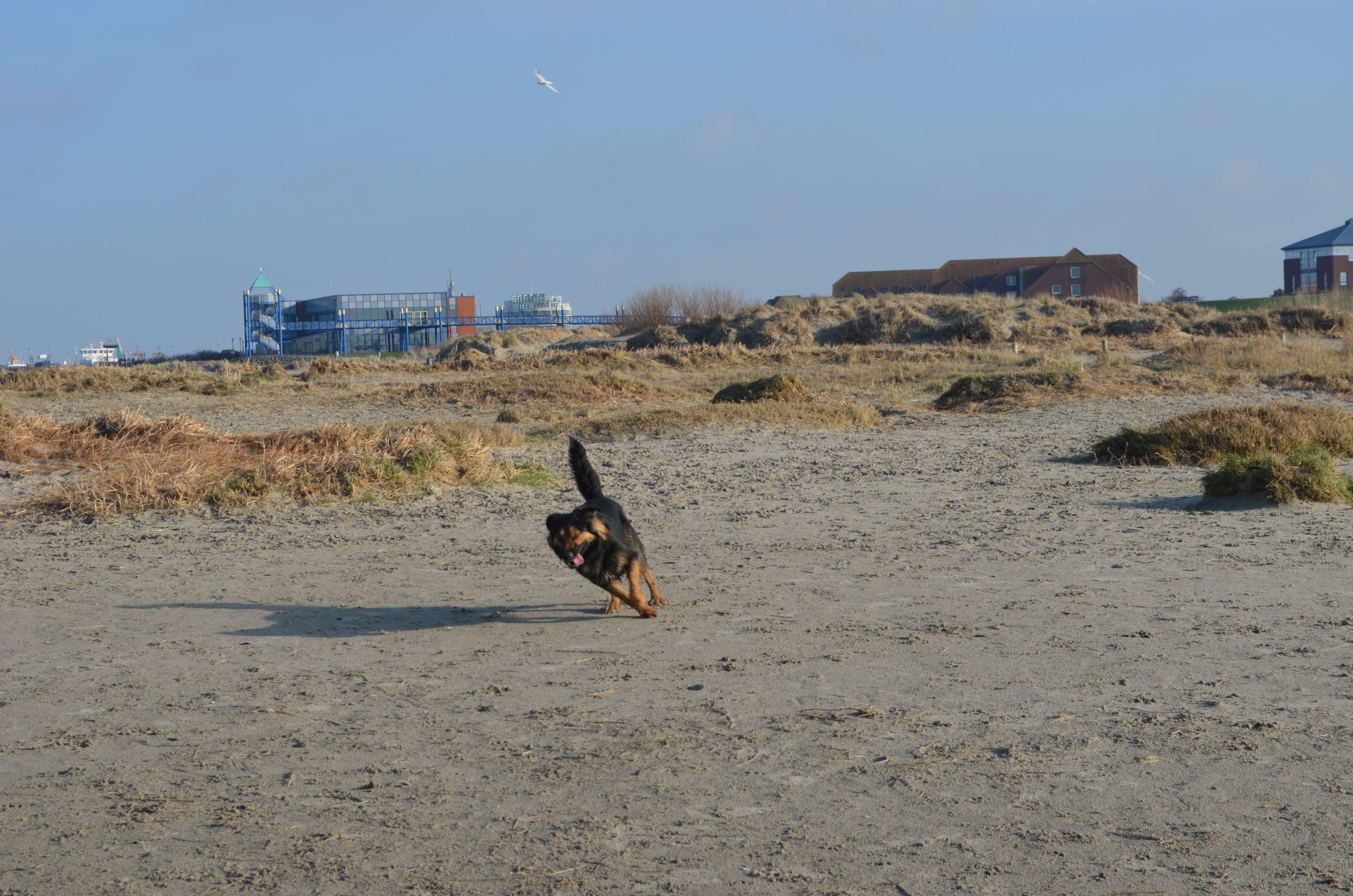 Da Lacht Das Hundeherz Am Hundestrand Von Norddeich Konnen Sich Vierbeiner Richtig Austoben Hundestrand Hunde Urlaub Mit Hund