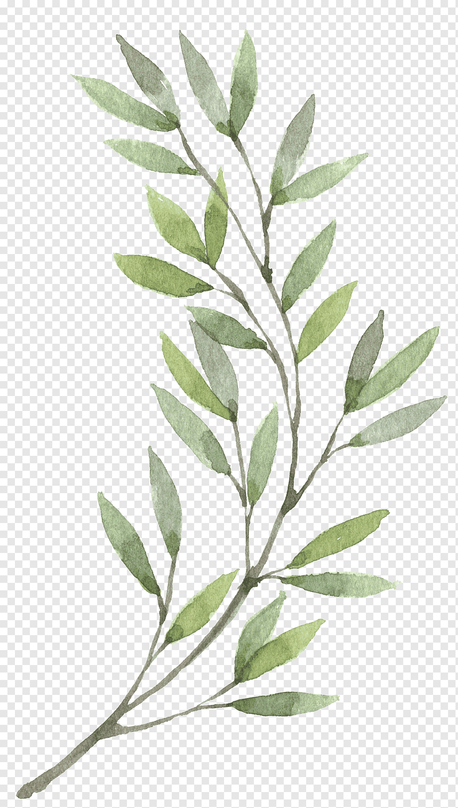 Wreath Watercolor Painting Flower Hand Painted Plants Green Leaves Painting Painted Leaf Branch Png Lukisan Bunga Lukisan Cat Air Ilustrasi Daun