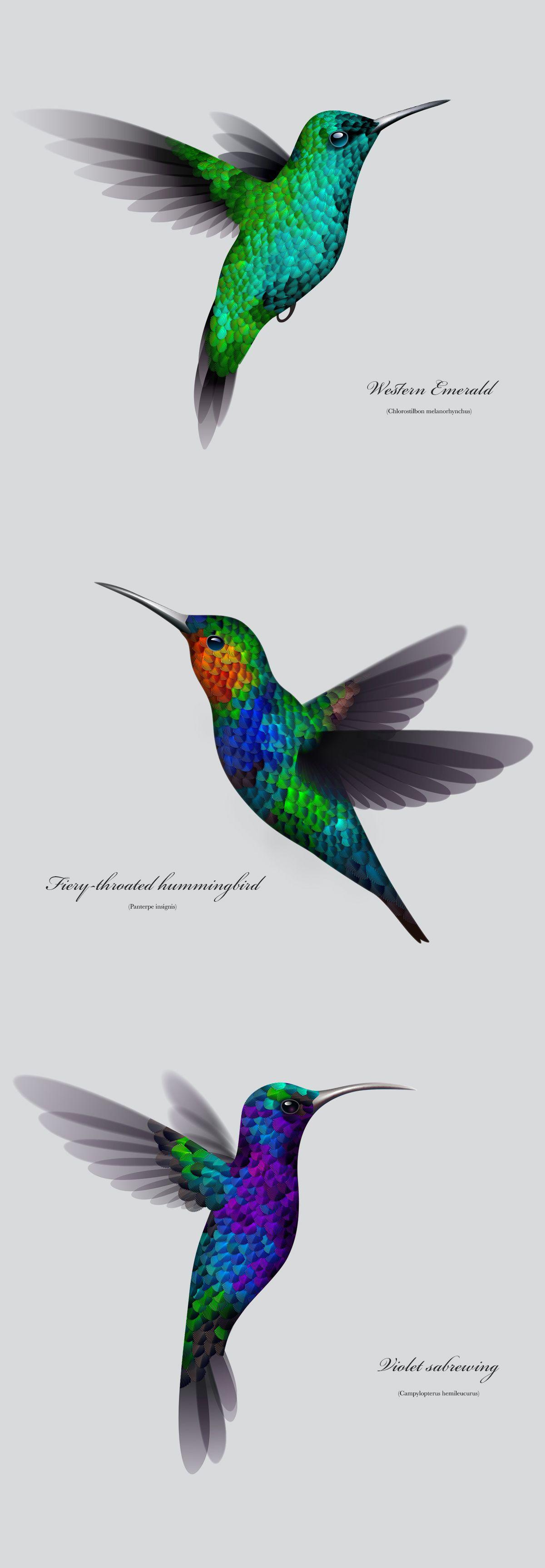 Colibri Color Hummingbird Painting Hummingbird Illustration