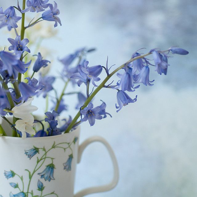 Cup of bluebells pinterest cups english and flowers cup of bluebells mightylinksfo