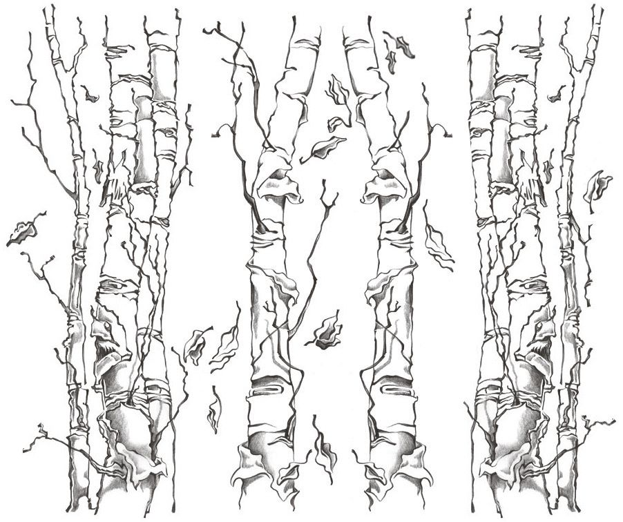 gallery for birch tree leaf drawing - Birch Tree Branches Coloring Pages