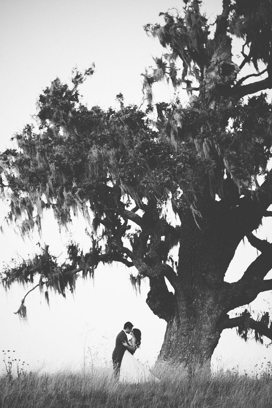 Santa Lucia Preserve Oak Tree Photography: Brittrene Photo   brittrenephoto.com Photography: Britt Rene Photo   brittrenephoto.com   View more: http://stylemepretty.com/vault/gallery/38379