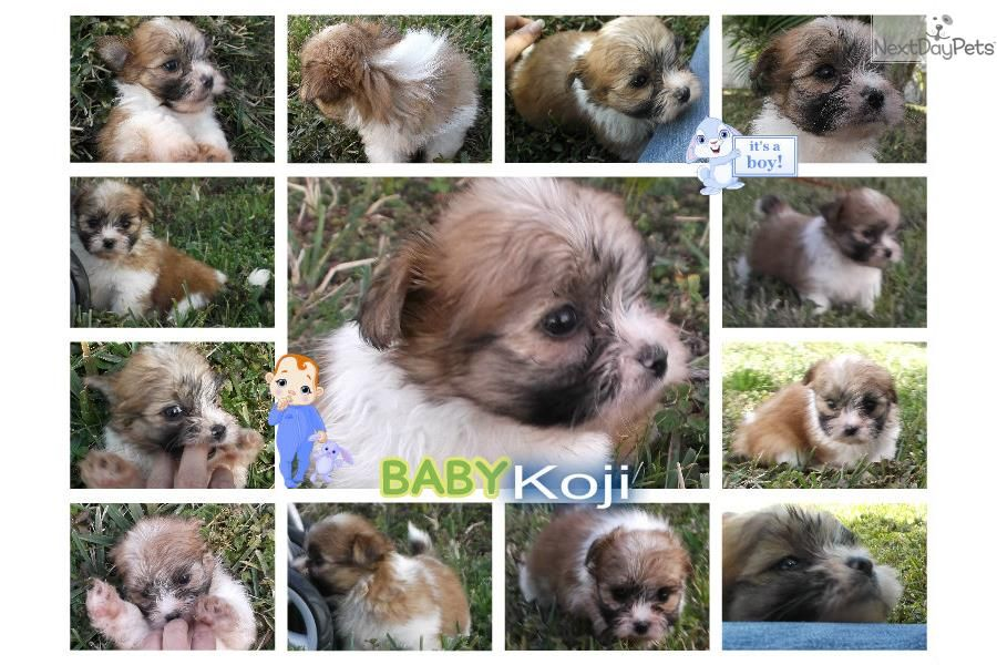 Puppies for adoption in palm beach county