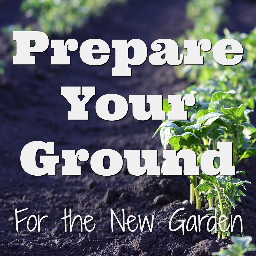 How to prepare the ground for your garden low