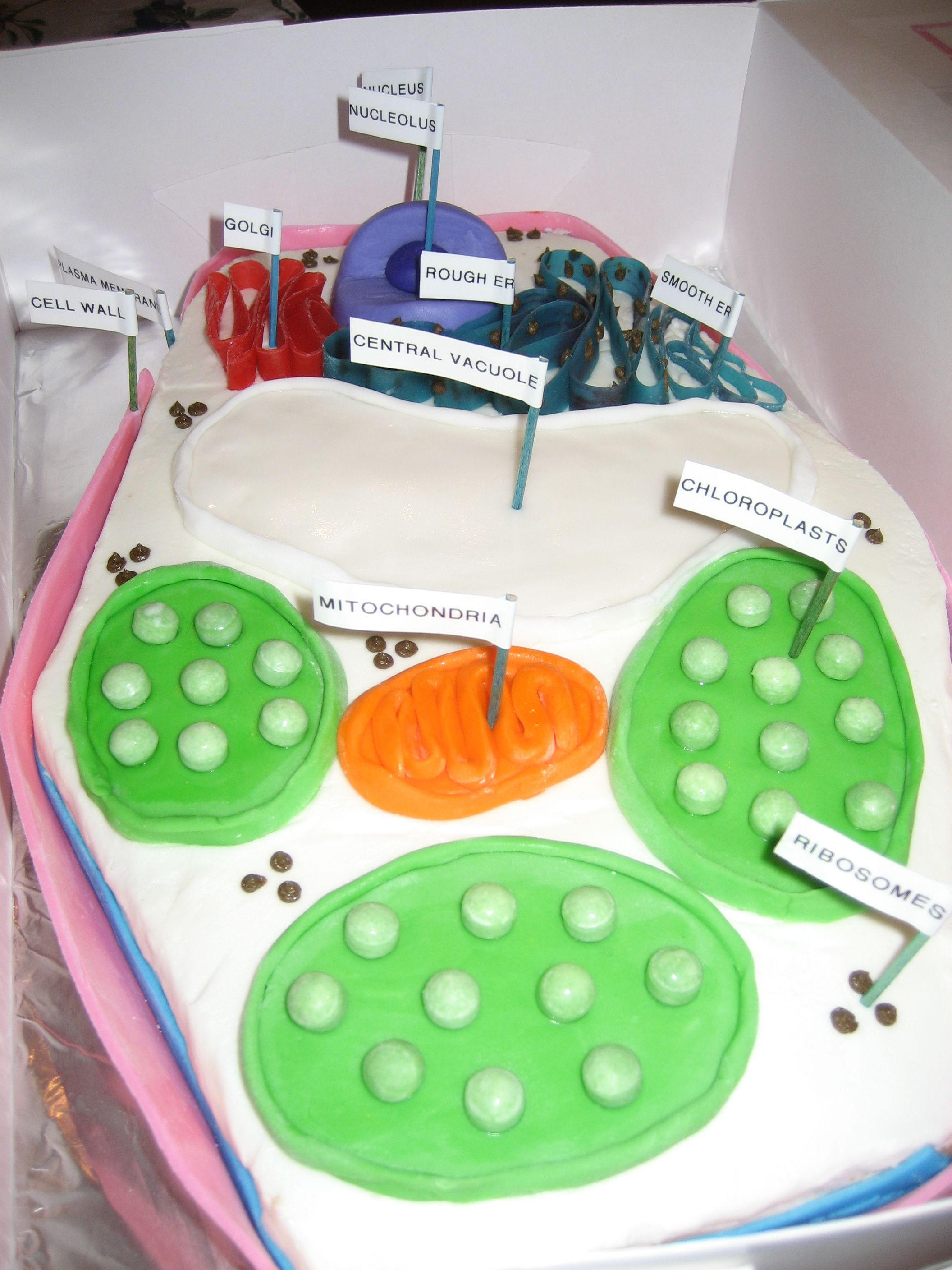 Science Project Catherine Had To Build A Plant Cell It S Made From Cake