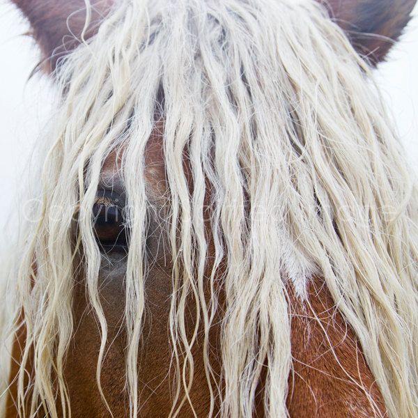 Horse Photography Blonde Comtois Horse Fineart Print Wall Decor 22 00 Via Etsy Horse Art Horse Photography Horses