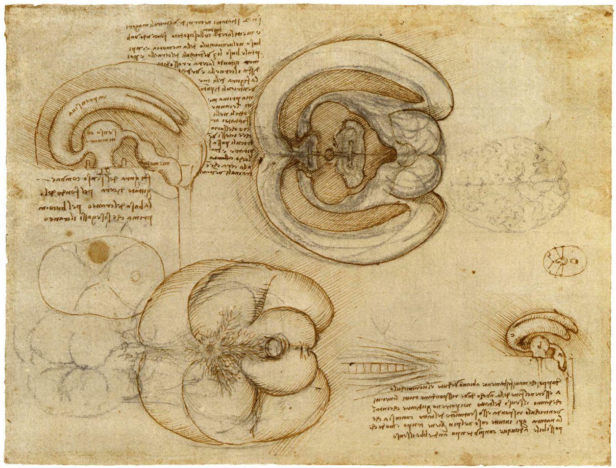Leonardo Da Vinci - Anatomía del cuerpo humano (1257×956) | Leonardo ...