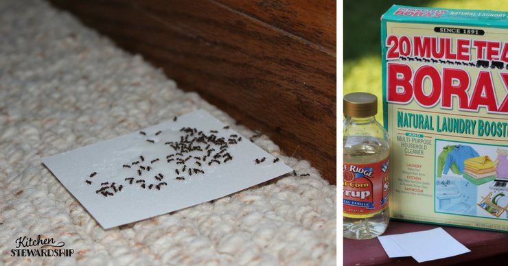 Pin on make nontoxic to kill in your home
