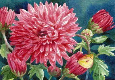 Zeh Original Art Blog Watercolor and Oil Paintings: Pink Chrysanthemums & Sulphur Butterfly