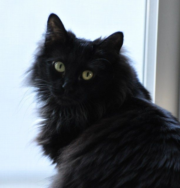 Pictures Of Window Cats Long Hair Cat Breeds Cat Breeds Cats