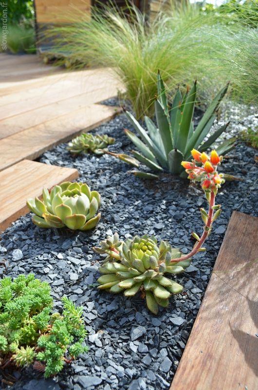 Sur Les Toits De Marseille Plante Pour Jardiniere Deco Jardin