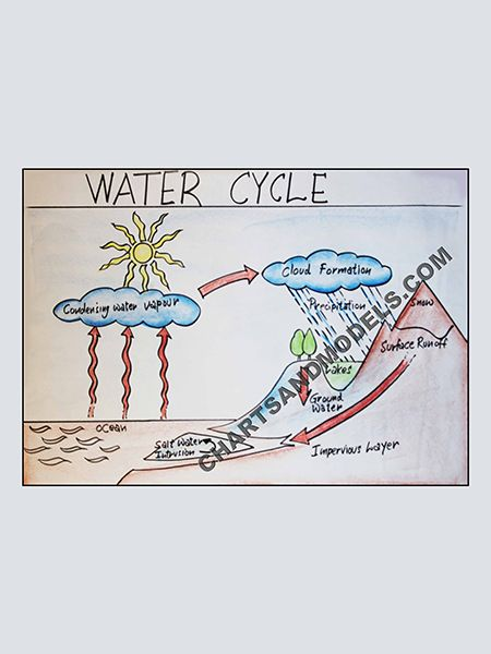 Buy water cycle chart online for schools as well students regarding their project also rh pinterest