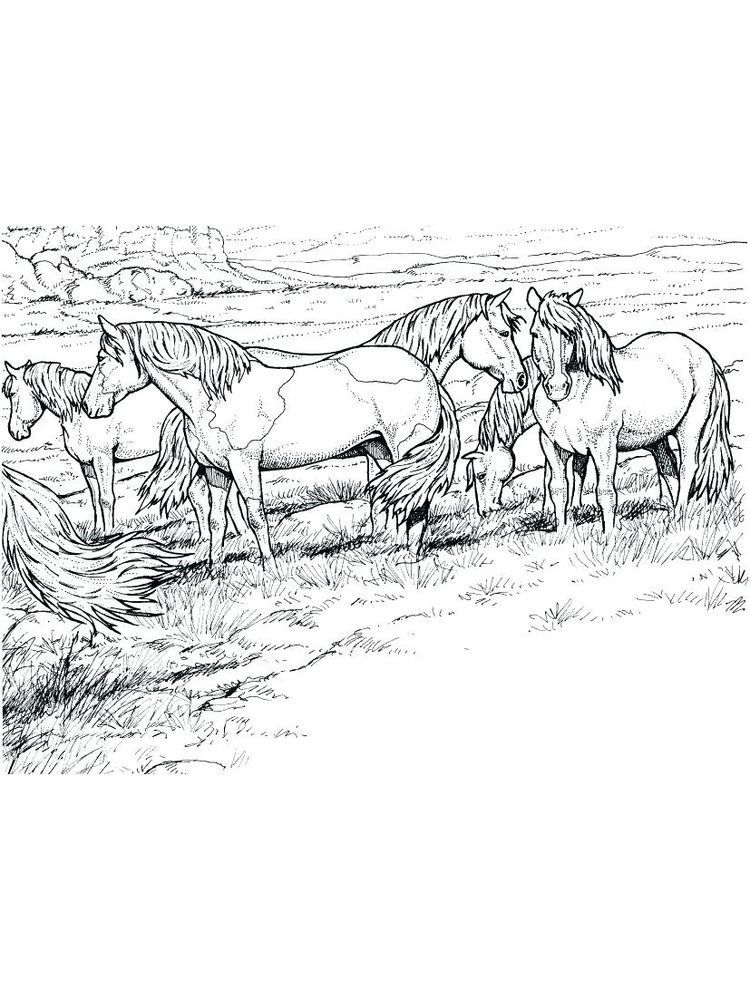 Wild Horse Coloring Pages Printable Horses Are Known As Runner Animals So They Are Often Used As Fas Horse Coloring Pages Horse Coloring Books Horse Coloring