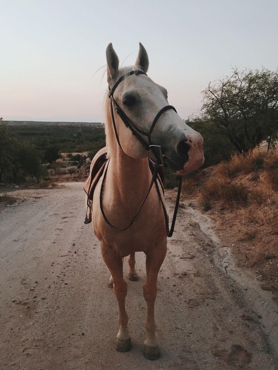 Pin van Lidy van Dijk op Horses / Paard   Foto, Sprookjes