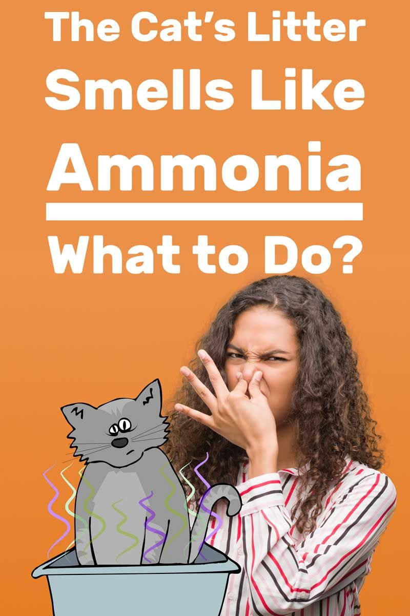 The Cat S Litter Smells Like Ammonia What To Do Article By Litter Boxes Com Litterboxes Tcs Thecatsite Cat Litter Smell Litter Box Smell Cat Urine Smells