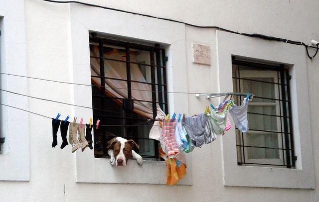 Dog in the laundry_ Alfama_Lisbon by Pría