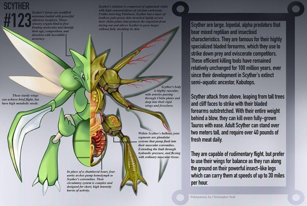 El libro de anatomía que muestra el interior de los Pokémon | anime ...