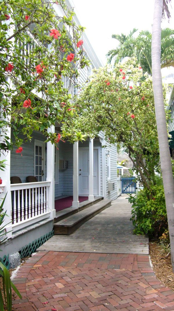 The Garden Plants At Lighthouse Court Guest House In Key West Florida   A  Beautiful Vacation
