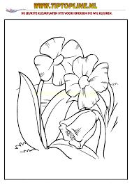 Afbeeldingsresultaat Voor Kleurplaten Bloemen Afbeeldingen Pinterest