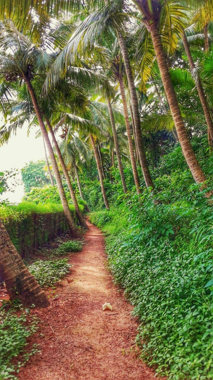 Endless Nature Of Goa