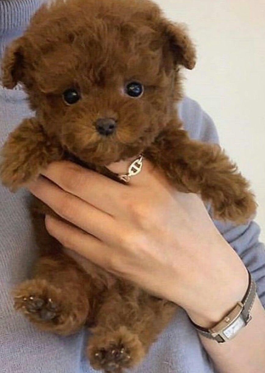 Animals And Pets おしゃれまとめの人気アイデア Pinterest Ikuko