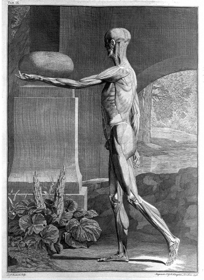 Bernhardus Siegfried Albinus: Tables of the skeleton and muscles of ...