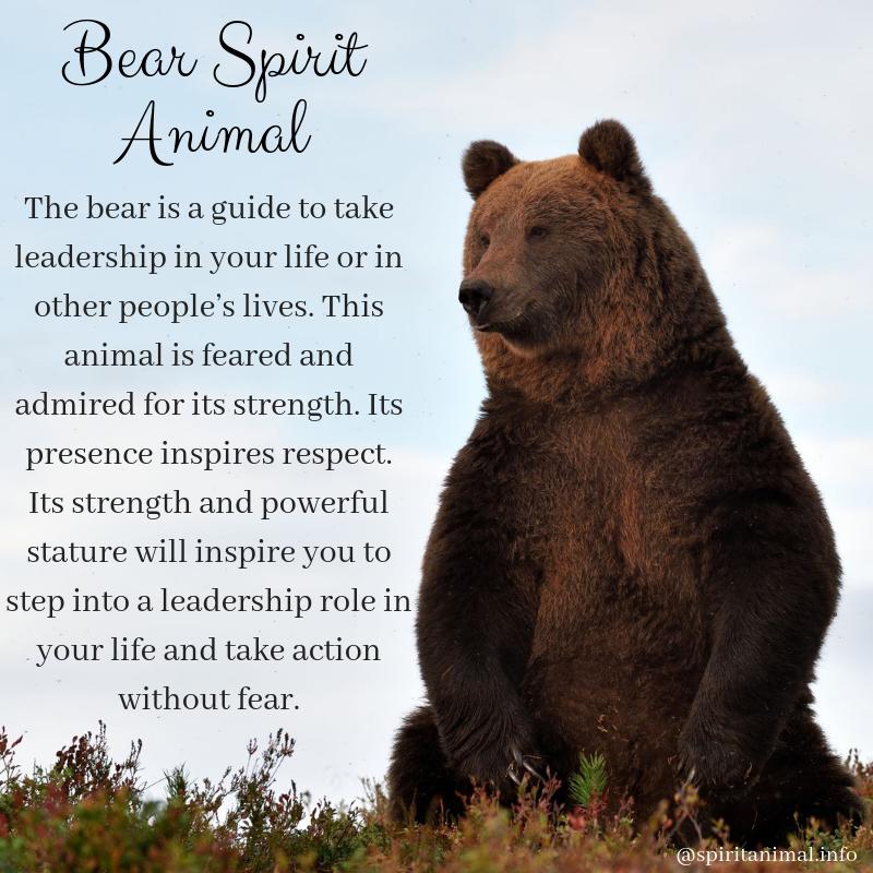 Bear Spirit Animal #bears