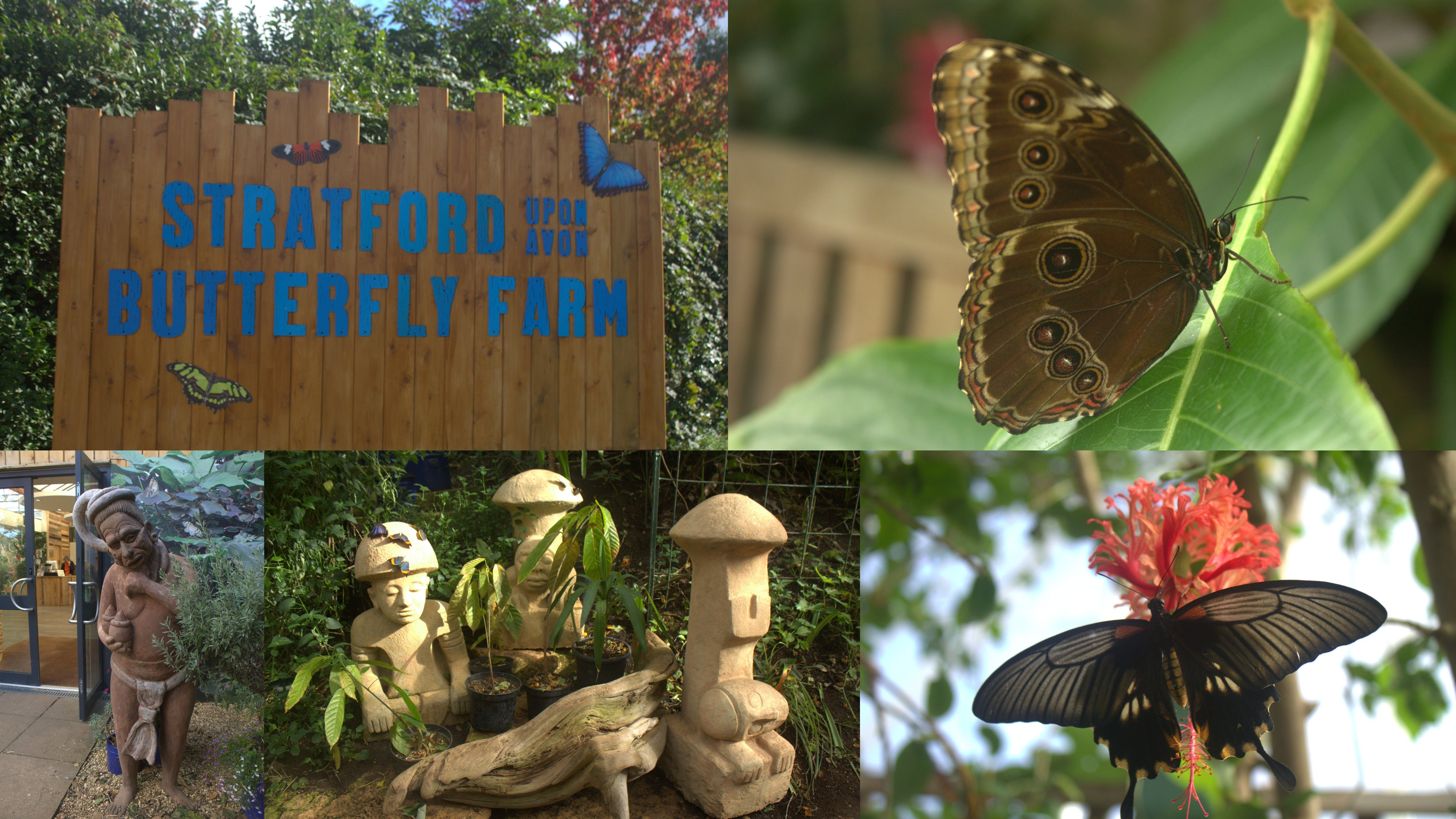 Butterfly Farm, Stratford-upon-Avon