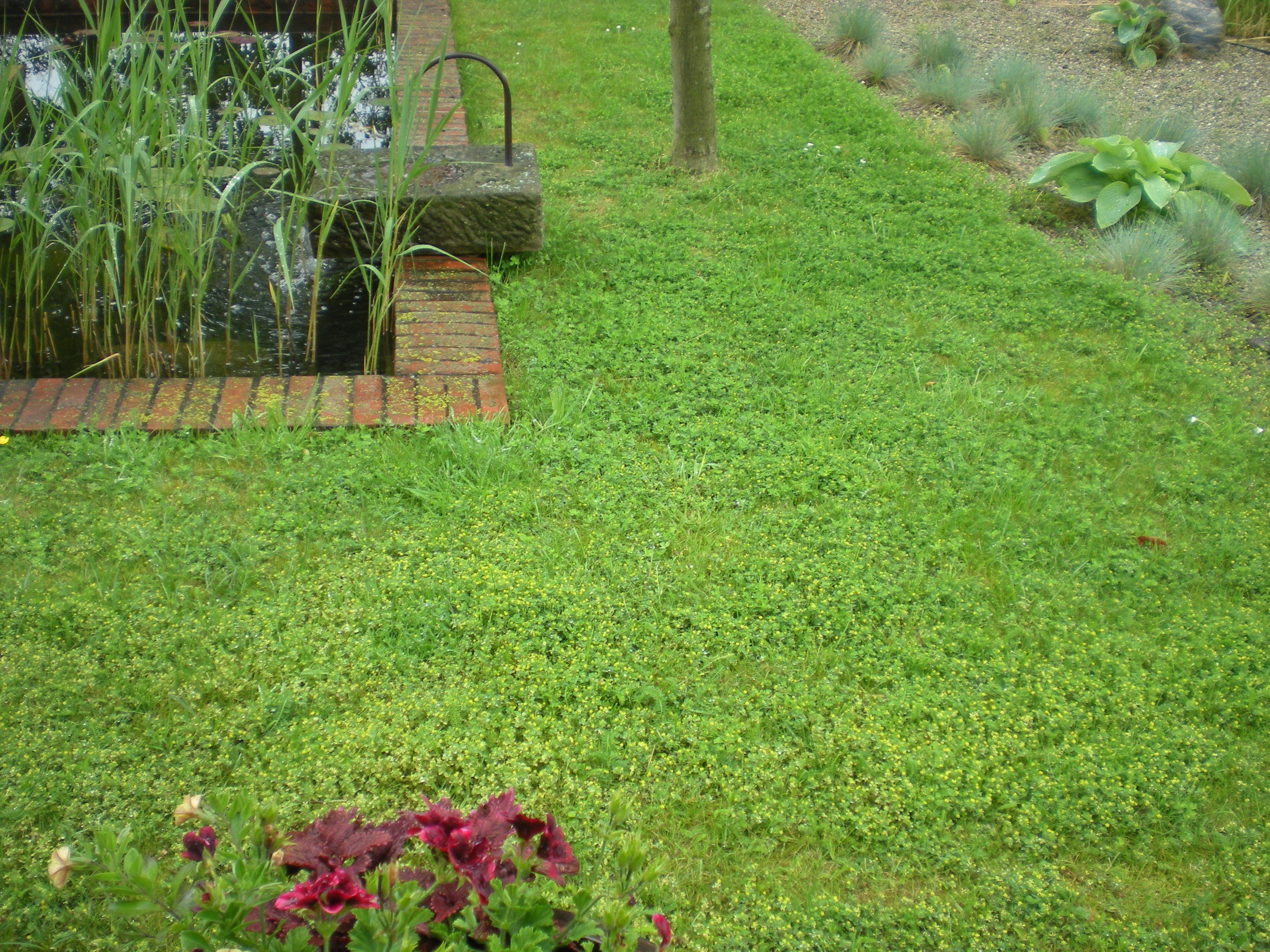 фильтр, газон из белого клевера фото отзывы любую