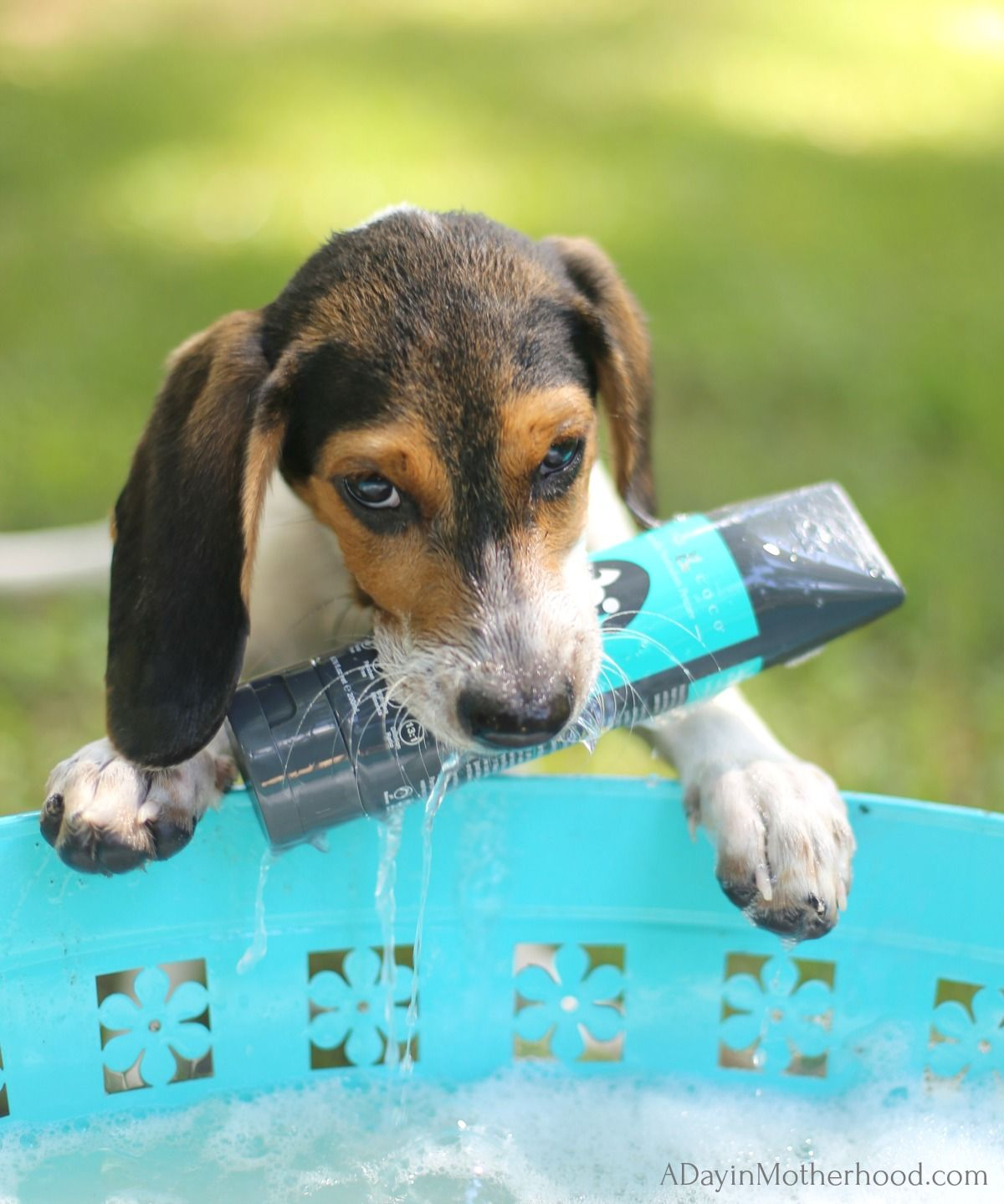 How Often Should I Bathe My Puppy Bathing A Puppy Puppy Find