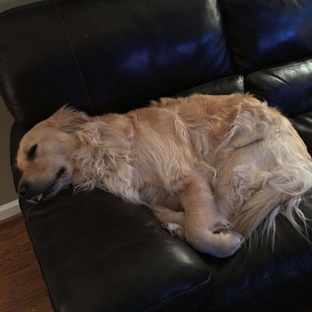 OMG my lazy boy