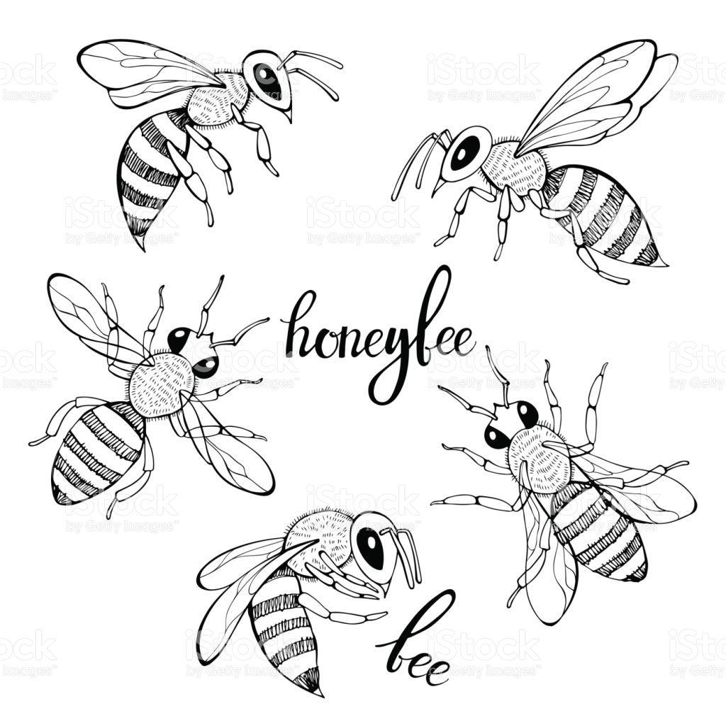 Bildergebnis Fur Bienen Vektor 蜂の絵 蜂 花柄 イラスト