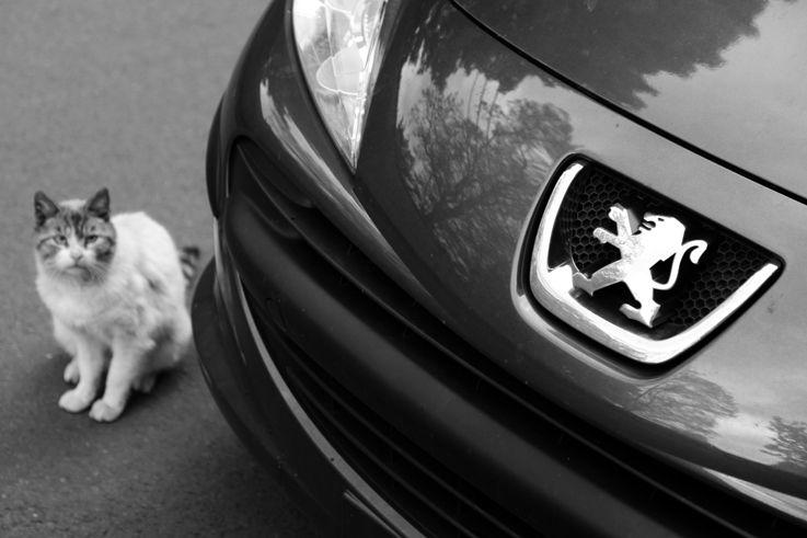 Le Lion Et Le Chat Lion Chat Peugeot