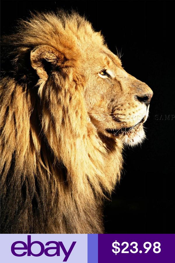 Big Male African Lion Portrait Photo Art Print Poster Picture Bmp008a African Lion Side Portrait Lion Canvas