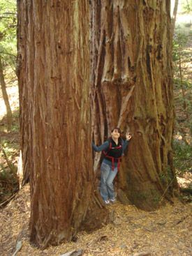 Muir Woods Ancient Redwood Forest San Francisco California