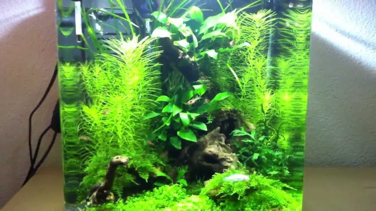 Led Licht Für Nano Aquarium Aquarium Eheim Aquastyle 24liter Eheim Innenfilter 11watt Led