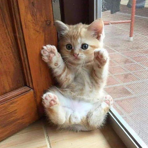 Dear Tabby: My Friend Got A Kitten From A Breeder,