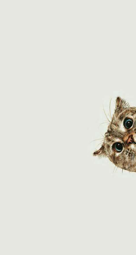 Here S A Cute Wallpaper For Y All Not Mine Cat Wallpaper Cute Wallpapers Curious Cat Background cute wallpapers cats