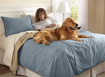 Perfect BEST Dog Proof Cover Ever! Just Found This Dog Proof Bedding   Reversible  Dog