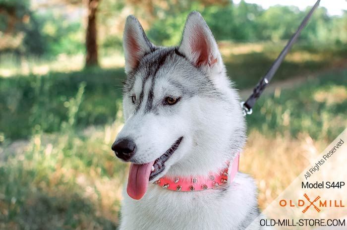 Pink Leather Spiked Girl Dog Collar With 3 Rows Of Spikes Old Mill Store Siberian Husky Husky Girl Dog Collars