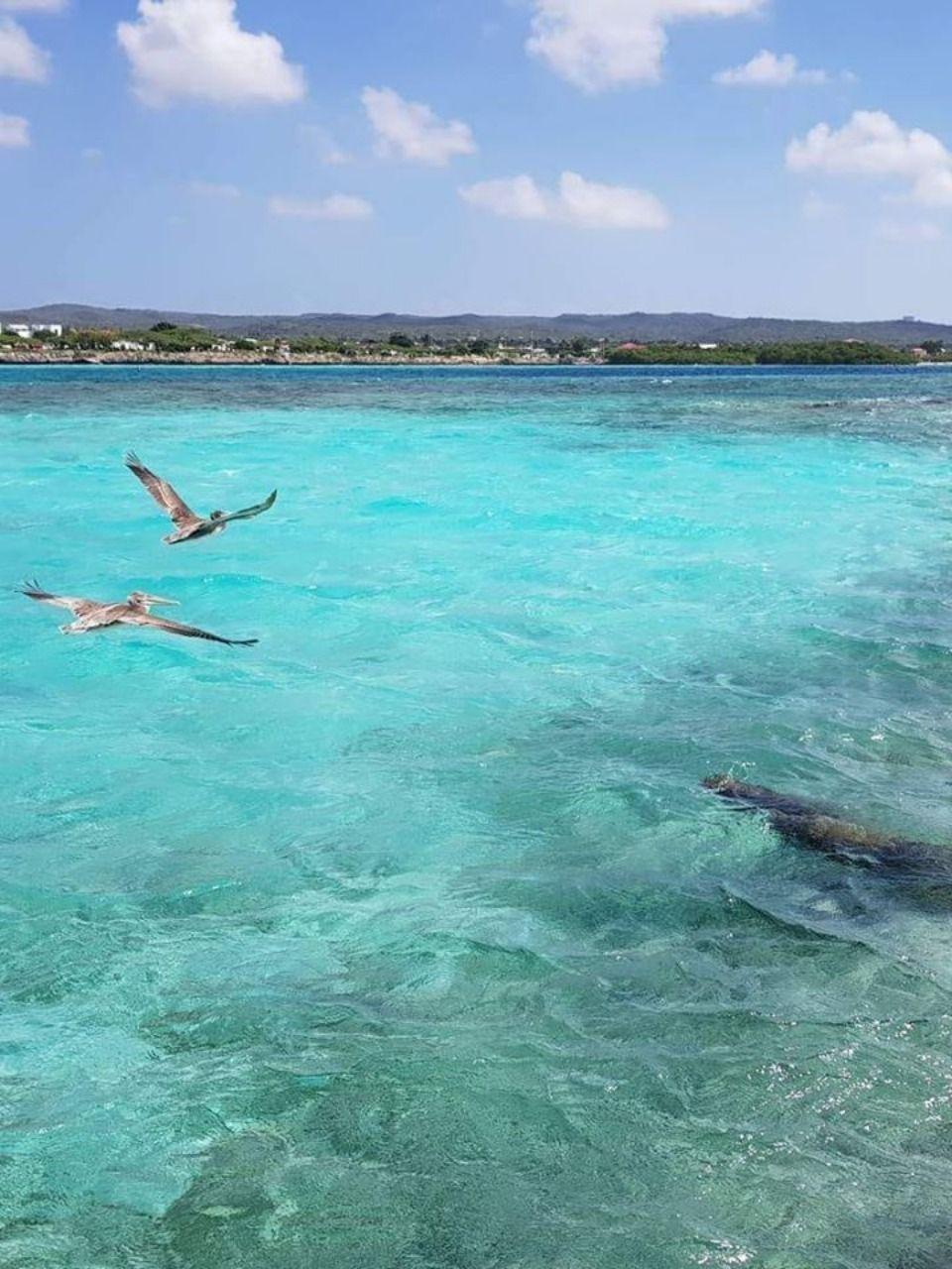 Pin By Visitaruba On Aruba Beaches Aruba Beach Aruba Beach