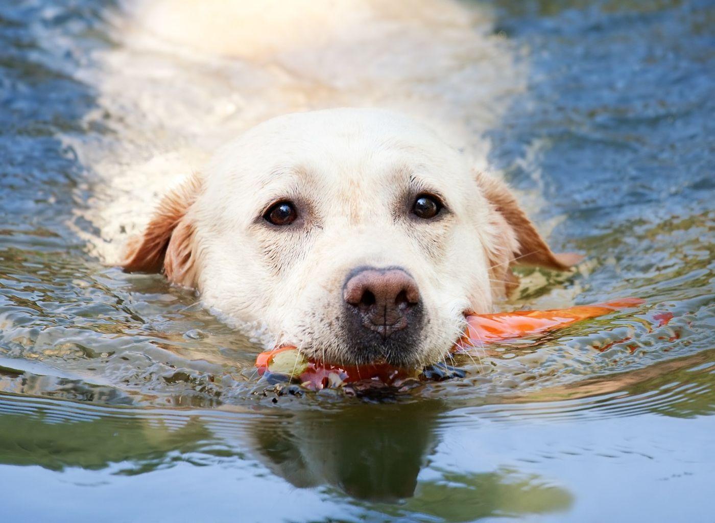 Die schönsten HundeBadeseen in Bayern Schöne hunde