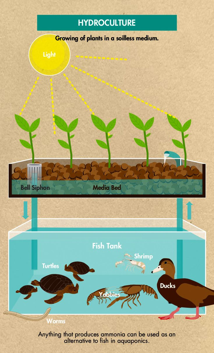 Do It Yourself Home Design: Alternatives To Fish For Aquaponics