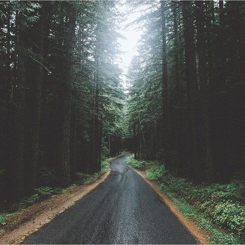 Imagem através do We Heart It #alone #alternative #background #black #carretera #cool #Dream #forest #forever #indie #quote #tumblr #vintage #vista #wallpaper #pino #instagram #palegrunge #paisaje