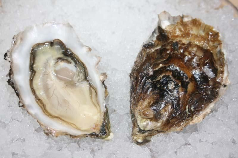 Milwaukee:  Kusshi oysters