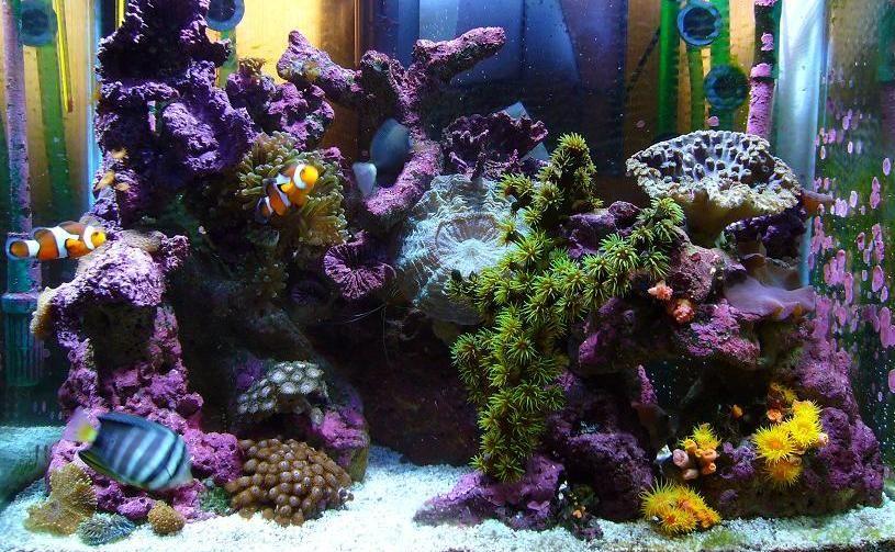 Aquarium Starter Kits Coralife Biocube 32 Review With Images Saltwater Aquarium Marine Aquarium Fish Marine Aquarium